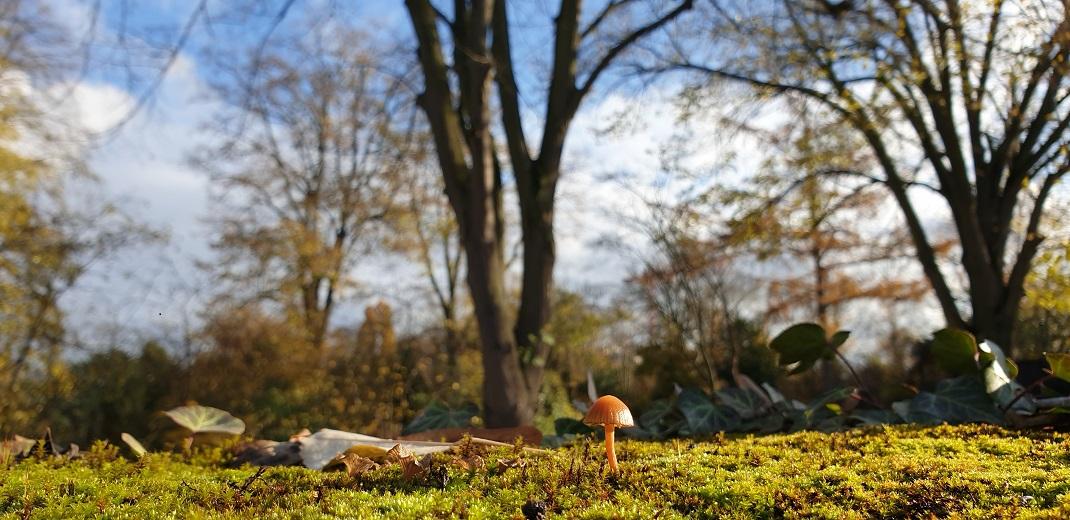 Flanieren im Botanischen Garten