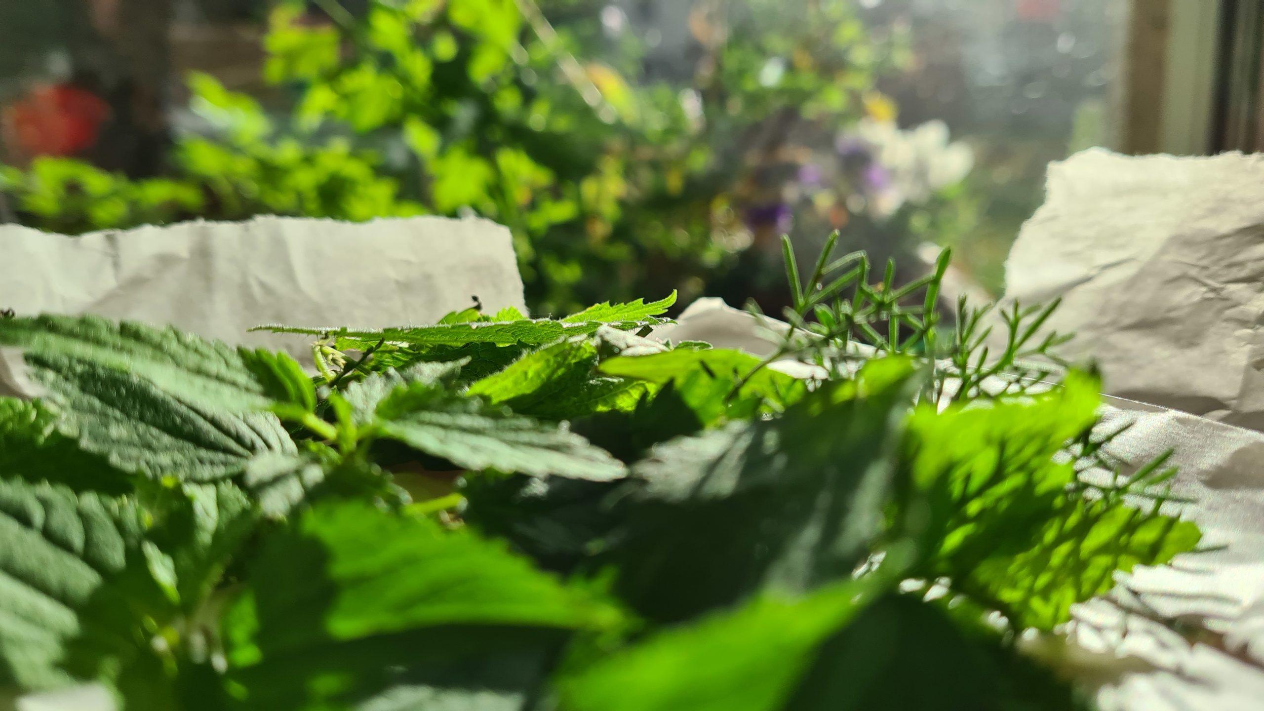 Morgen Tee von meiner Fensterbank